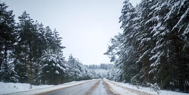 Foto de estrada de inverno com árvores na neve durante o dia