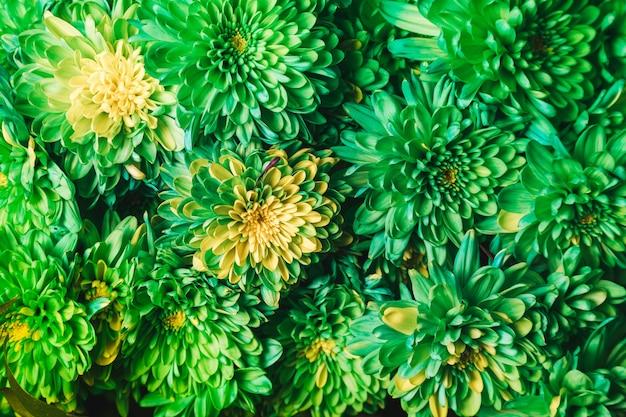 Foto de flores verdes no centro de uma linda loja