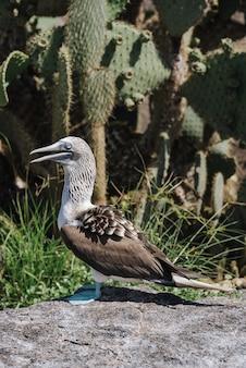 Foto de foco raso de um pássaro pateta