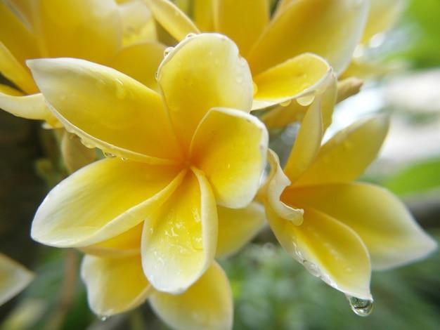 Foto de foco raso de uma flor amarela vibrante