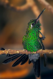 Foto de foco raso vertical de colibri brilhante com coroa verde empoleirado em um galho fino