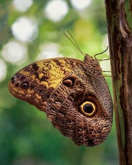 Foto de foco seletivo da borboleta marrom camuflada em um tronco de árvore
