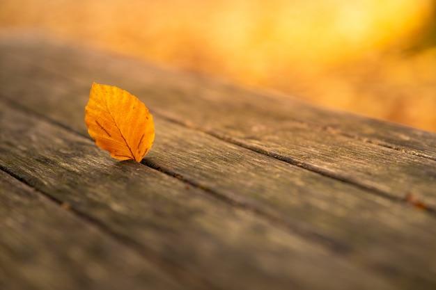 Foto de foco seletivo da folha amarela de outono em um banco de madeira