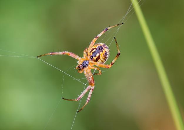 Foto de foco seletivo de aranha em seu ambiente natural
