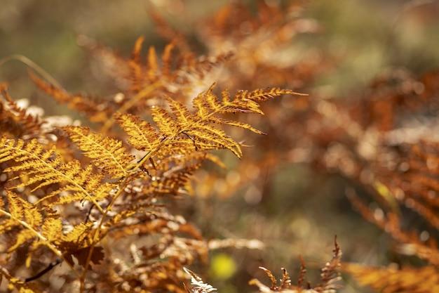 Foto de foco seletivo de belos galhos de uma árvore de outono
