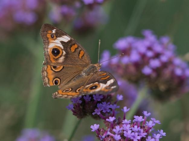 Foto de foco seletivo de borboleta de madeira salpicada em uma pequena flor