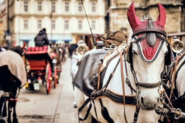Foto de foco seletivo de cavalos brancos nas ruas de viena, áustria