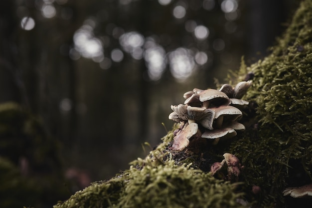 Foto de foco seletivo de cogumelos ostra