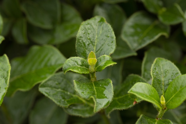 Foto de foco seletivo de crescimento de folhas verdes na floresta
