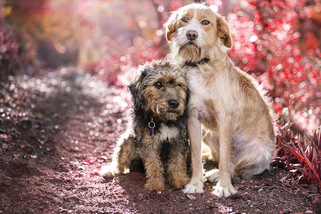 Foto de foco seletivo de dois cachorros simpáticos e fofos sentados lado a lado na natureza