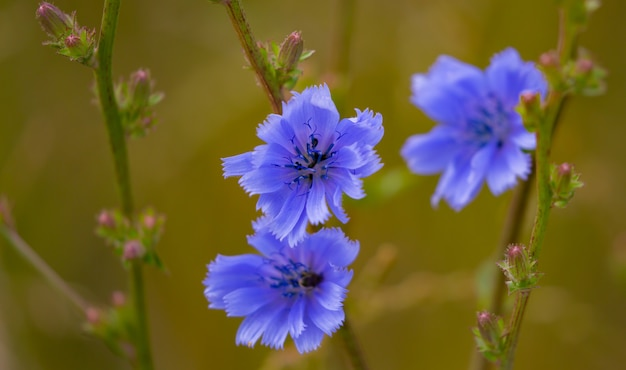 Foto de foco seletivo de flores azuis desabrochando no jardim