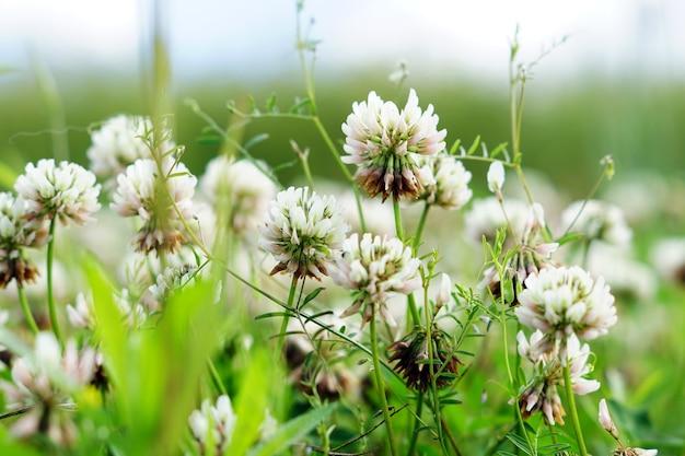 Foto de foco seletivo de flores brancas em um campo