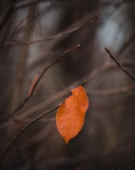 Foto de foco seletivo de folha marrom em um galho