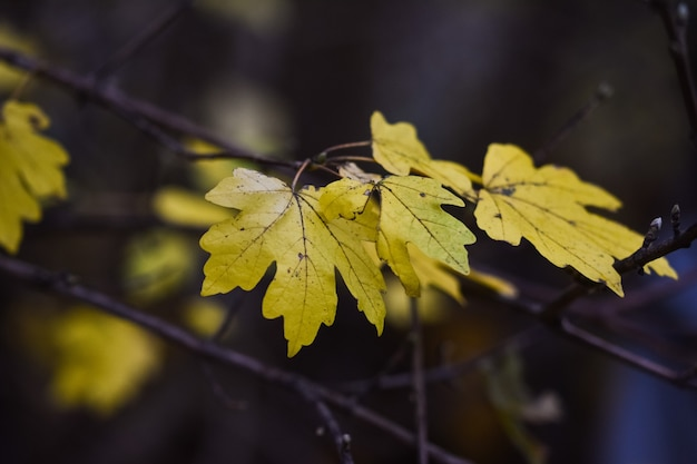 Foto de foco seletivo de folhas de outono
