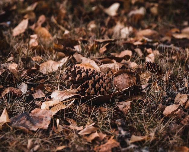 Foto de foco seletivo de folhas marrons e cones no chão