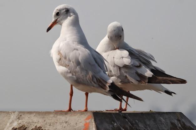 Foto de foco seletivo de gaivotas empoleiradas na superfície da pedra