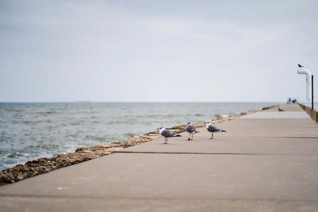 Foto de foco seletivo de gaivotas na passarela ao lado de uma praia