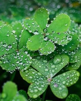 Foto de foco seletivo de gotas de orvalho nas folhas verdes
