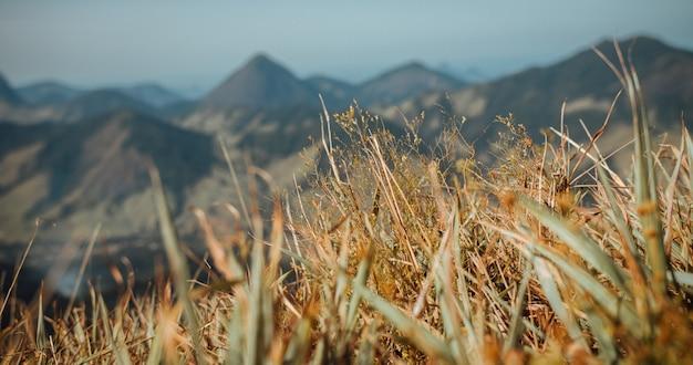 Foto de foco seletivo de grama seca com belas montanhas