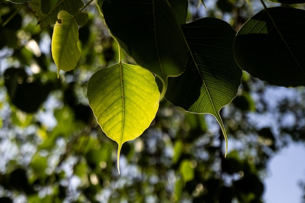 Foto de foco seletivo de knotweed boêmio com bokeh de fundo