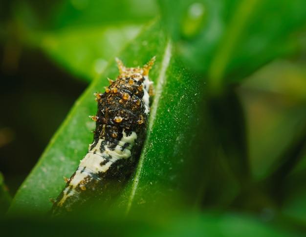 Foto de foco seletivo de lagarta na folha da planta