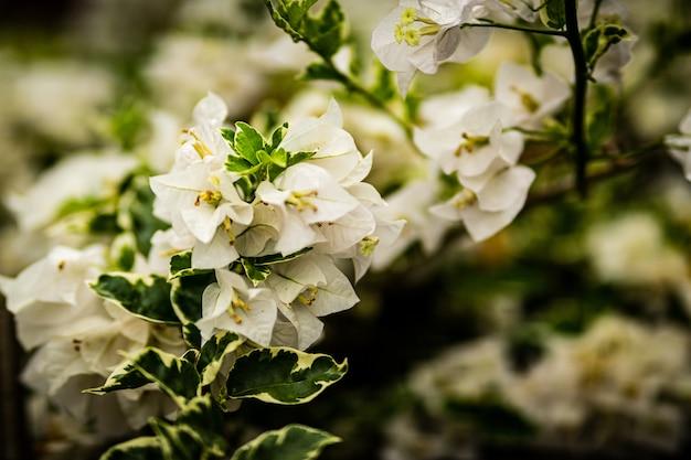 Foto de foco seletivo de lindas flores de cerejeira