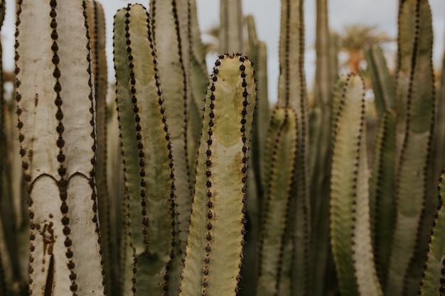 Foto de foco seletivo de lindos cactos