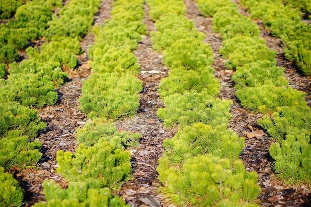 Foto de foco seletivo de plantas verdes em uma linha
