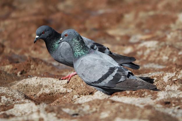 Foto de foco seletivo de pombos no chão