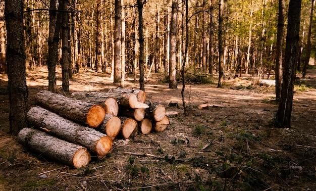 Foto de foco seletivo de toras de madeira em uma floresta ensolarada
