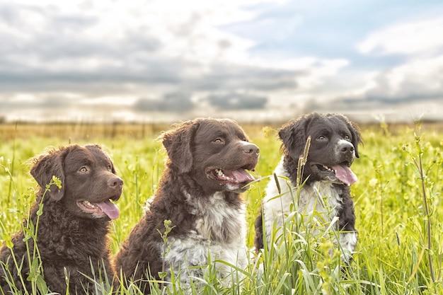 Foto de foco seletivo de três cachorros adoráveis