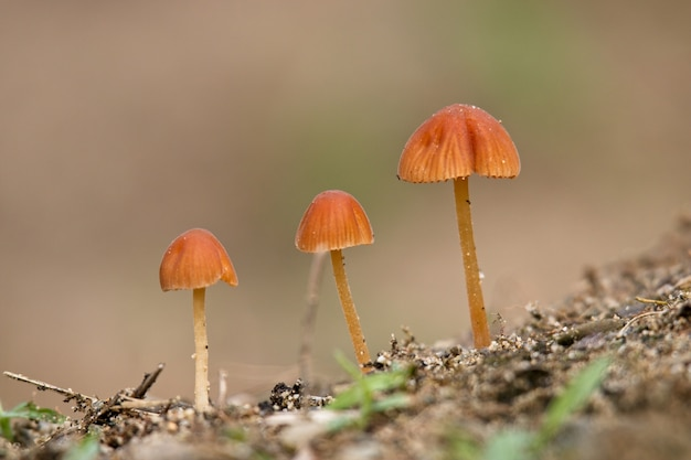 Foto de foco seletivo de três lindos cogumelos com um borrão