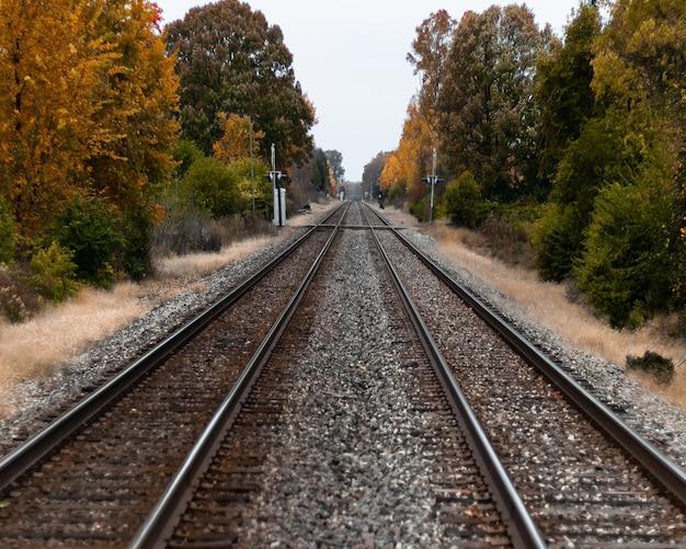 Foto de foco seletivo de trilhos de trem no meio de árvores verdes e amarelas