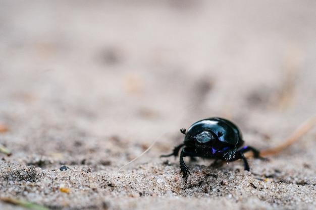 Foto de foco seletivo de um besouro caminhando em um prado arenoso em uma floresta holandesa