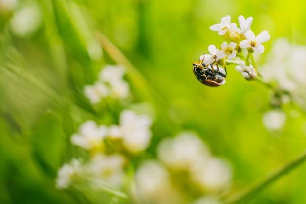 Foto de foco seletivo de um besouro joaninha em uma flor em um campo capturada em um dia ensolarado