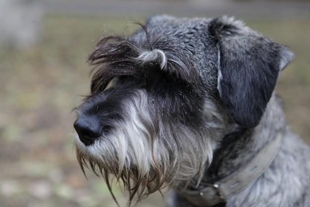 Foto de foco seletivo de um cachorrinho adorável