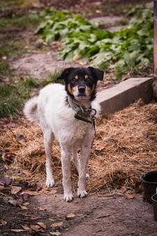 Foto de foco seletivo de um cachorrinho fofo no quintal