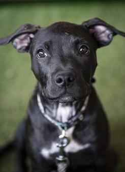 Foto de foco seletivo de um cachorrinho preto olhando