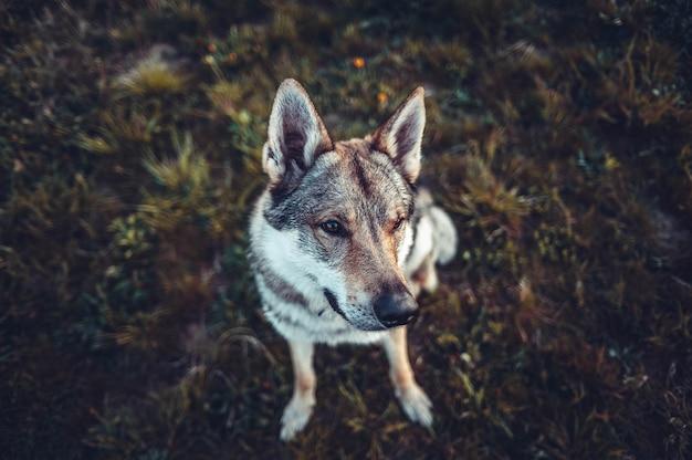 Foto de foco seletivo de um cachorro marrom e branco sentado no chão olhando para a esquerda