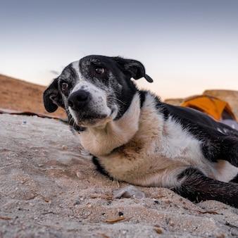 Foto de foco seletivo de um cachorro triste deitado na areia com uma tenda laranja no espaço