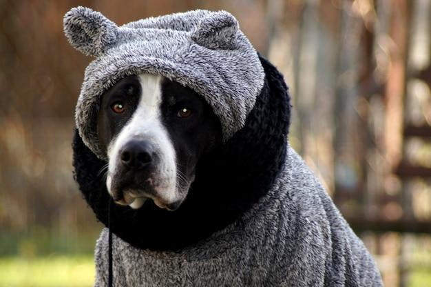 Foto de foco seletivo de um cachorro vestido com um suéter cinza de inverno