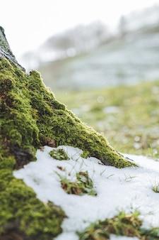 Foto de foco seletivo de um campo verde coberto de neve pela manhã