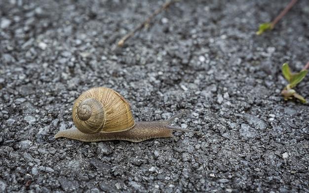 Foto de foco seletivo de um caracol rastejando lentamente no chão