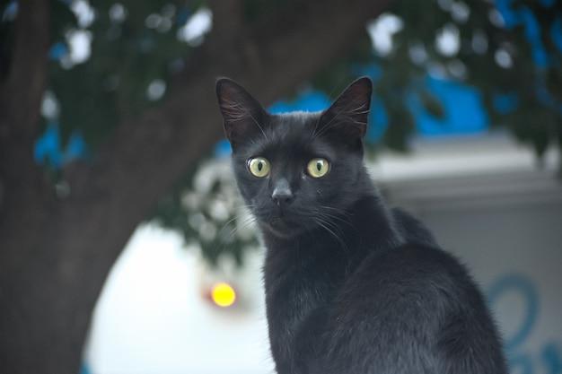 Foto de foco seletivo de um carro preto fofo com lindos olhos verdes