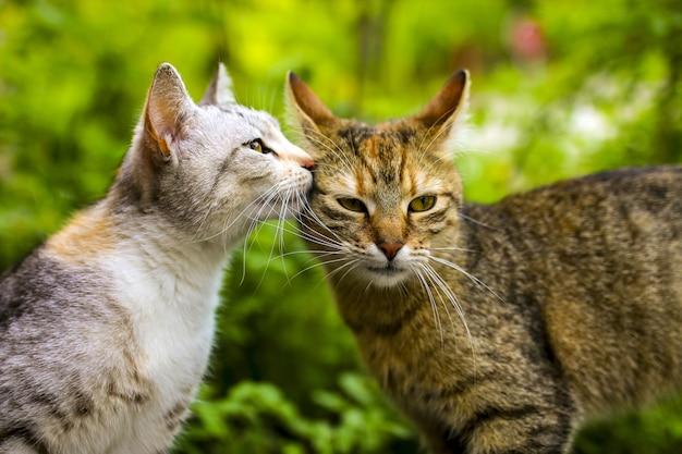 Foto de foco seletivo de um casal de gatos com bokeh