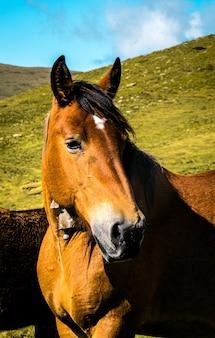 Foto de foco seletivo de um cavalo marrom em three peaks hill, na argentina