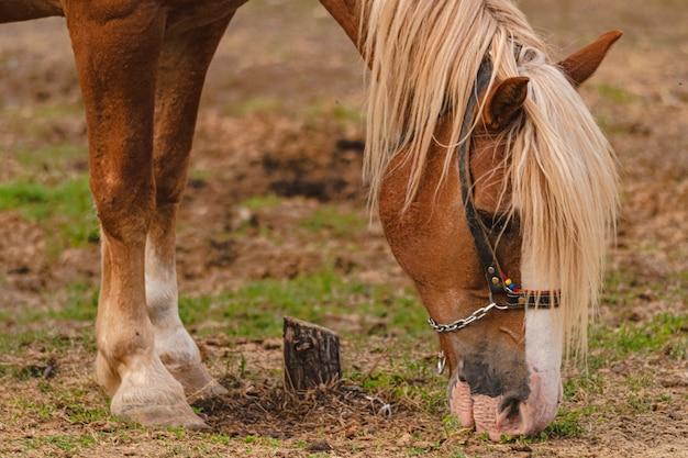 Foto de foco seletivo de um cavalo marrom pastando em uma fazenda