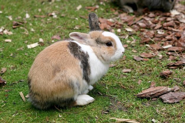 Foto de foco seletivo de um coelho no quintal