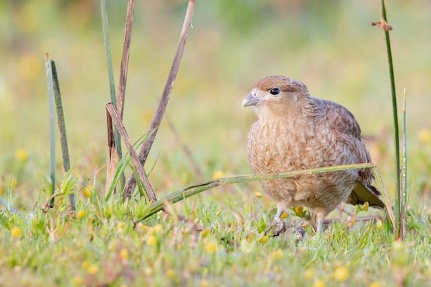 Foto de foco seletivo de um falcão na floresta