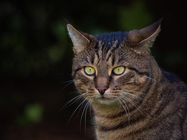 Foto de foco seletivo de um gato adorável de olhos verdes